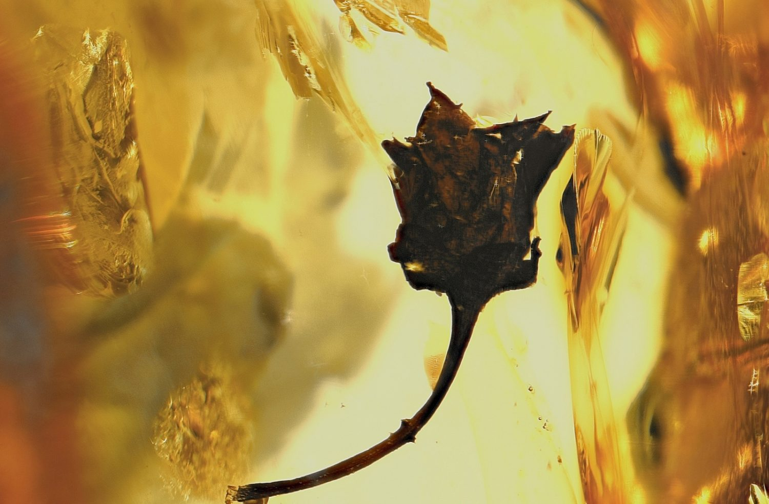 History, Types and Colors of Amber